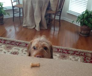 How can I grab that treat.