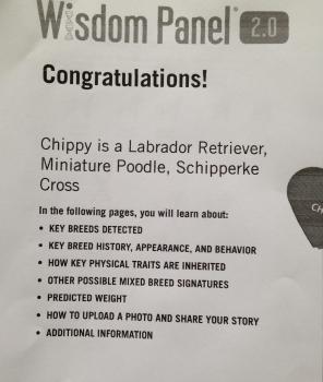chippy stuff