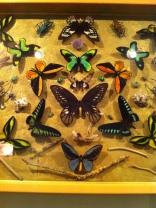 St. Tropez Dany Lartigues Butterflies