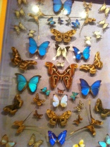 St. Tropez. More beautiful Butterflies