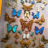 St. Tropez. More beautiful Butterflies