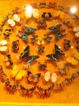 St. Tropez. More of Dany's Butterflies
