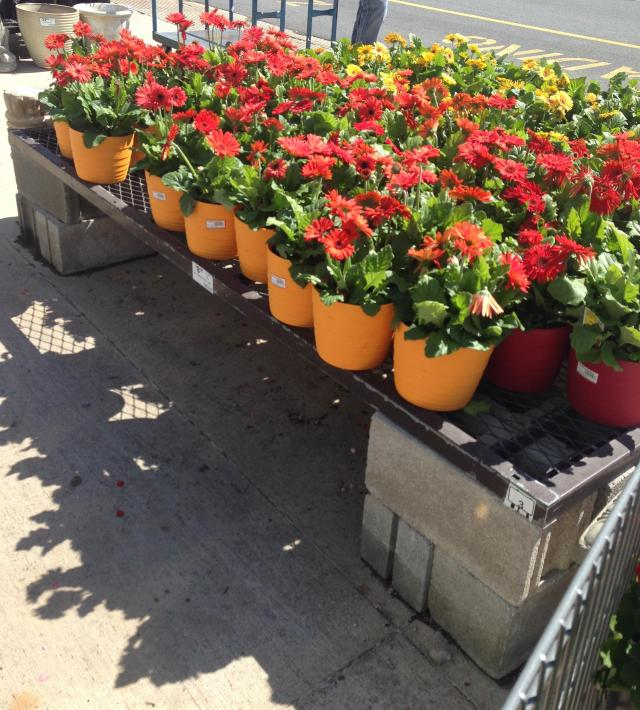 Aat Lowes what plants to choose