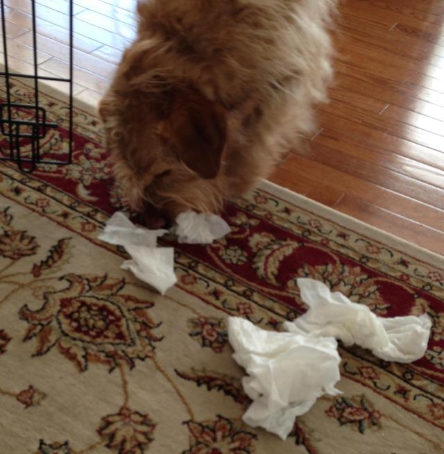 Busted. Now I know how my mother felt when I left a trail of snotty tissues