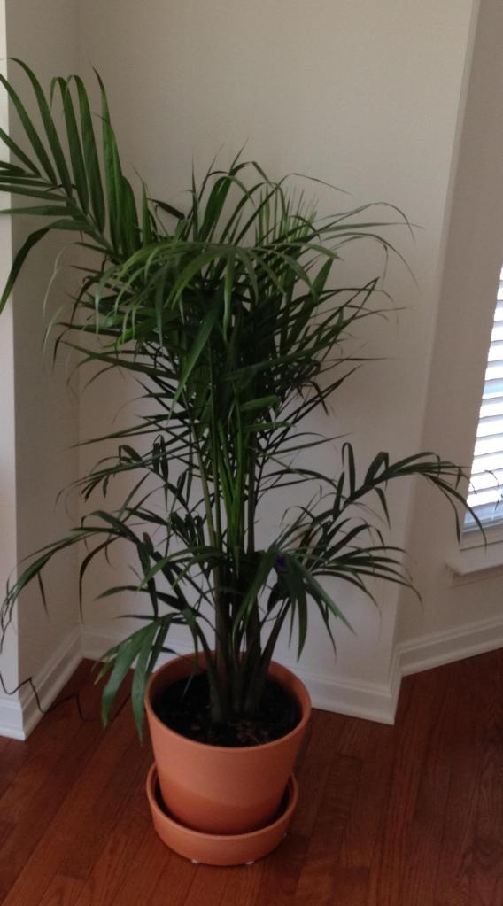 Our new palm plant. I'm very aware of Easter you know!