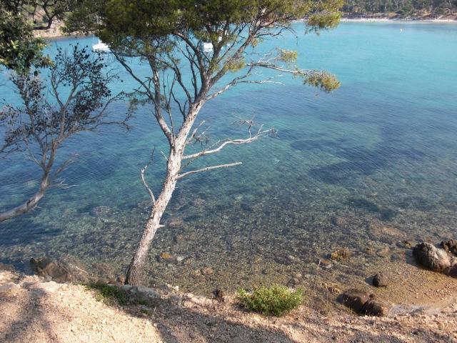 Estagnol Tree in Water 2010