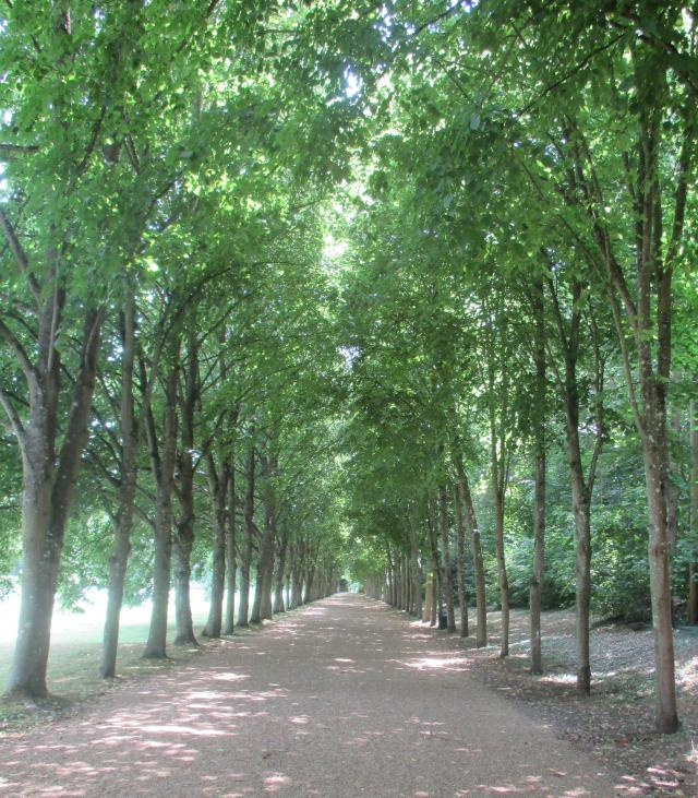 Maintenon. Lovely tree-lined pathway
