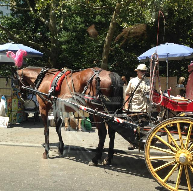 Saturday Horse buggy by the Plaza
