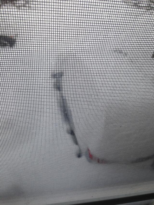 snowmageddon 2016 011
