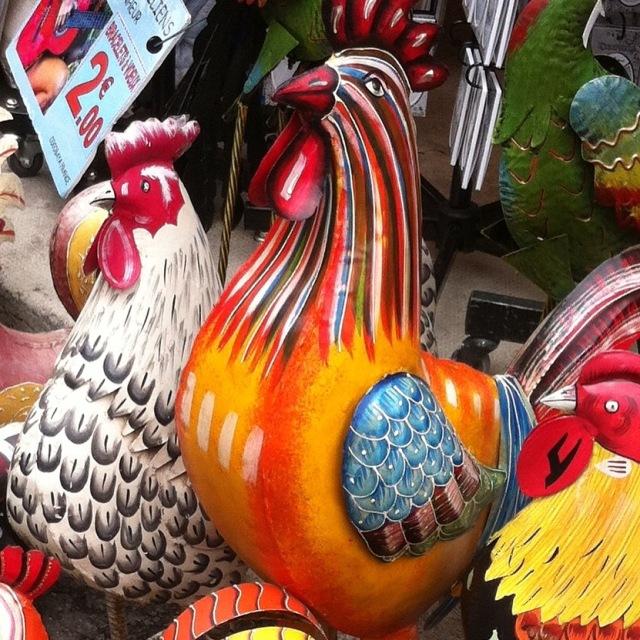 Hens in biot