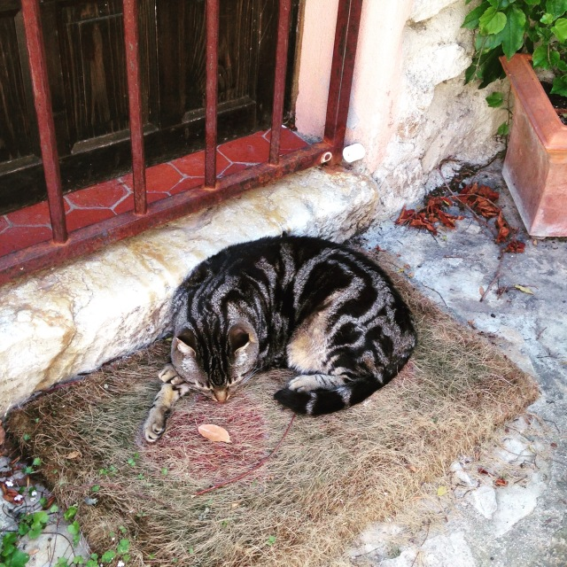 Cabris. sleeping cat at front door. GOLD