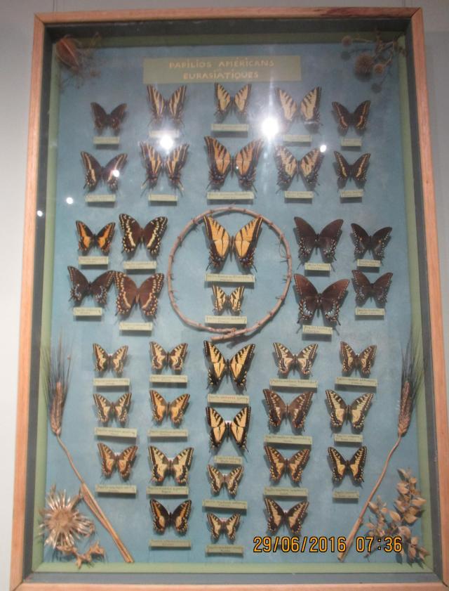 St. Trop. Maison des Papillions. Butterflies