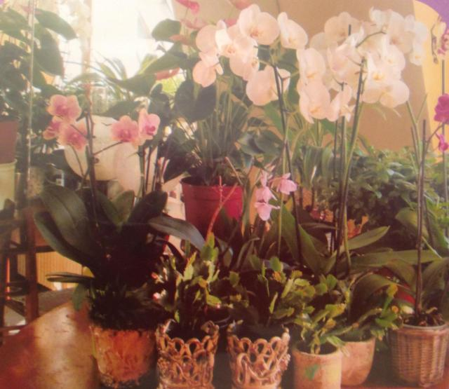 Orchids on the table