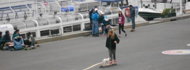 paris-dog-on-skateboard