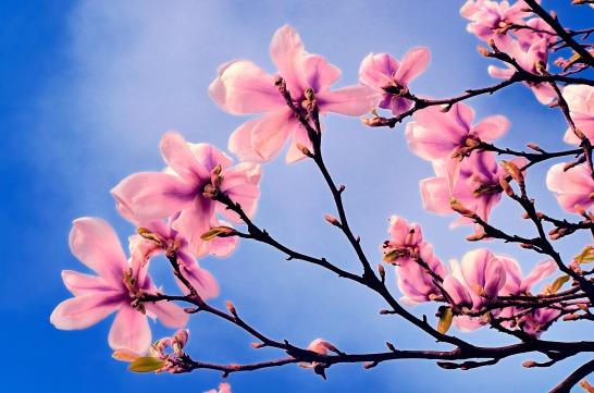 spring-tree-1333123084yha